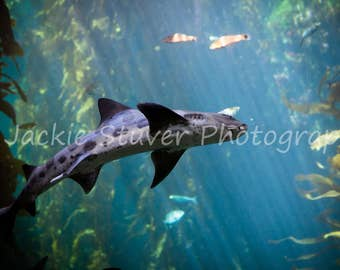 Shark Monterey Bay Aquarium California