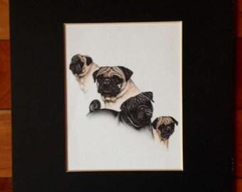 Vintage Pug Dog Print Matted