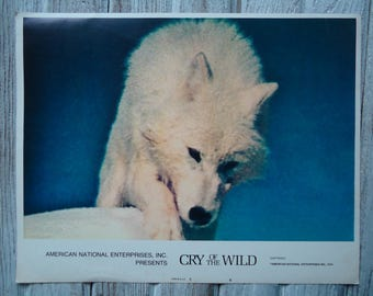 Vintage 1974 Cry of the Wild lithograph lobby card - Lobby Card Litho - 1974 Cry of the Wild - White Wolf - Lobby card - Wolf movie poster