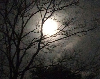 Moon & Trees Photo