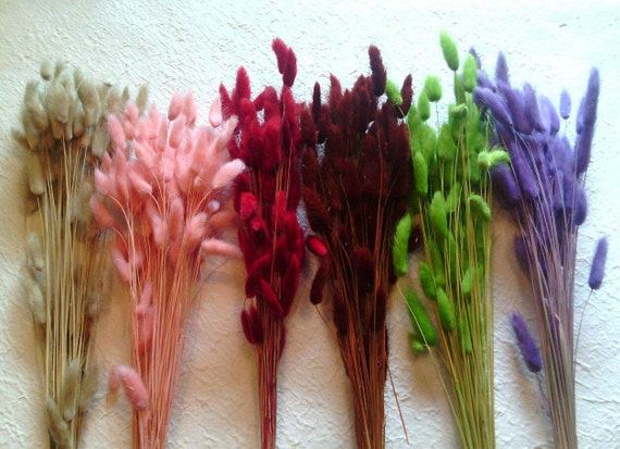 Bunny tail grass wedding supplies dried flower by for Dried flowers craft supplies