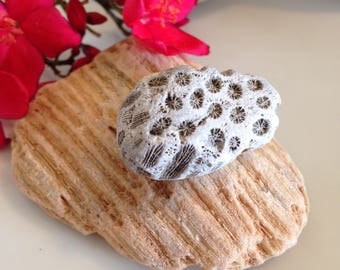 Fossil Coral Rocks, Natural Gray Coral Fossils, Very Old Fossils, Gray Long Fossil, Aquarium Decor, Embedded Coral Rocks, Fish Tank Decor