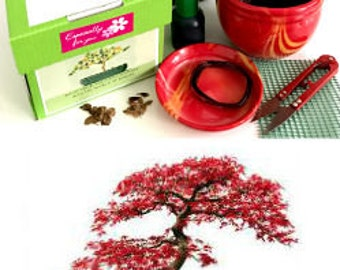 Premium Japanese Maple Bonsai Kit- 10 Pieces - All you need- complete- Excellent as a gift