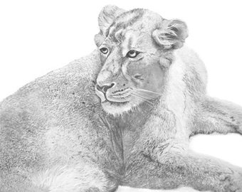 Lioness in monochrome