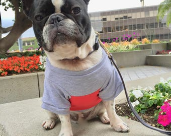 Color Block Shirt - Grey + Tangerine  (clothes for french bulldogs) dog sweater, Dog clothes, Pet clothing