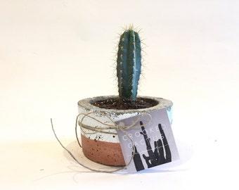 Medium Short Concrete Pot with Cactus
