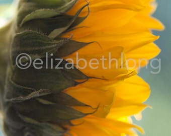 Yellow Sunflower - Yellow Flower Photo - Macro Photography - 8x10 Digital Download