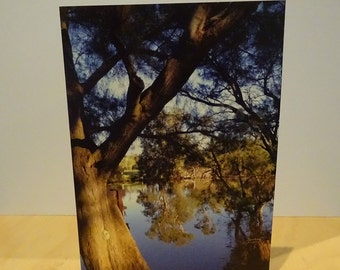 Swan Valley Western Australia Greetings Card Blank Natural unedited Photograph river reflection tree symmetry woodlands wild