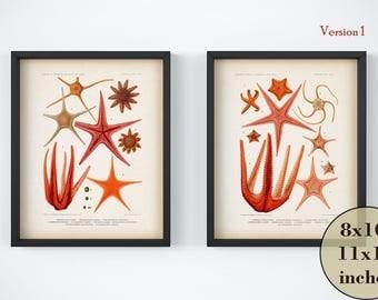 Vintage nautical print set, Instant download set of 2 nautical prints, Nautical illustrations, Starfish art, Marine printable art, Wall art