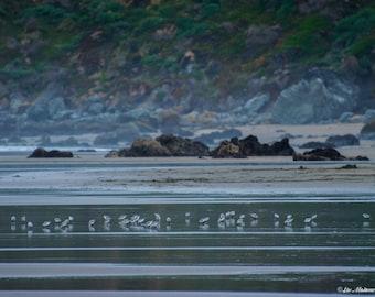 California Coast Shore