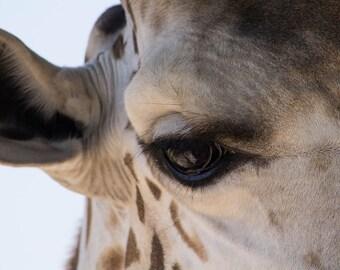 Giraffe Soul