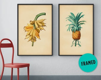 Botanical print set of 2 – Banana print, Pineapple print, Vintage botanical set, Framed botanical print, Framed art set, Framed print set
