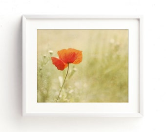 Printable downloadable photography. Delicate poppy print. Variety of sizes and ratios included. Wall art, greetings cards, stationery, etc.