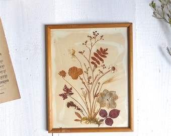French vintage frame wood Herbarium dried flowers Botany old naturalist french frame dry flowers shabby campaign deco decoration
