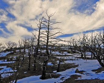 Western Photography SD > Fire in the Chiricahua Mountains in Arizona Fire Landscape Scenery Forest Snow Winter Scene