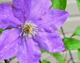 Flower After a Rainstorm-Digital Download Photography