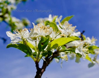 White Pollen, Photography, Home Decor