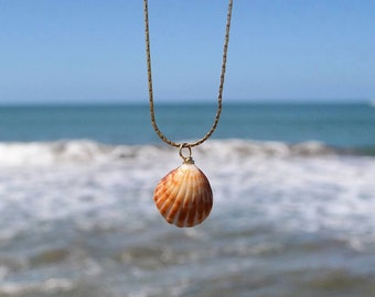 Shell - natural - Seashell - necklace necklace