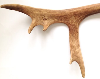 Reindeer antler: dogs chew toy