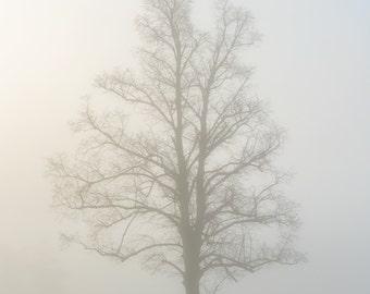 Lone Tree, fog, foggy, mist, morning, print, photo, framed, photograph