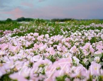 Digital backdrop field of pink wildflowers