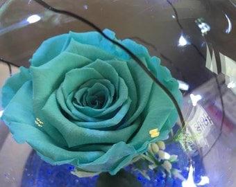 Turqoiuse Beauty and the Beast rose.
