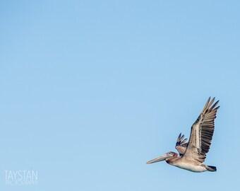 The Pelican ii, Fine Art Matte Print, Bird Photography, Pelican, Nautical Decor