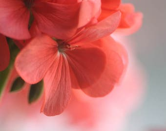 Petals of Pink 3, Photograph of Pink and Green Flower, Print, Light, Bridal, Valentine's Day, Mother's Day, Kitchen, House, Wall Art