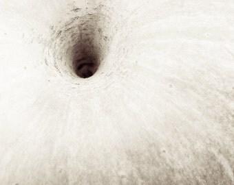 Apple - Close Up