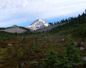 Mt. Hood National Forest, Oregon, NATURE photography, Trees, Wilderness, Mountain