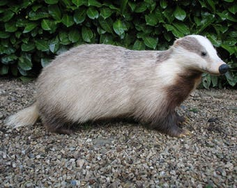 A Very Nice Vintage French Taxidermy Blonde / Pale Badger