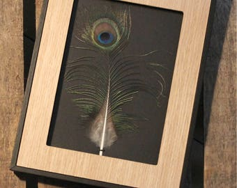 Framed Peacock feather / unique / the pen box
