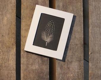 Framed Numidia Guinea fowl feather / unique / the pen box