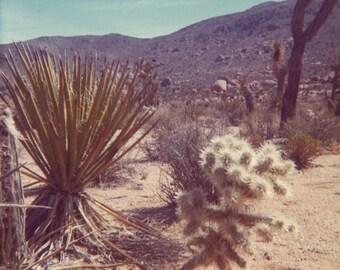 70's Desert Vintage Photo Print