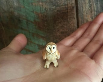 Small Little Barn Owl