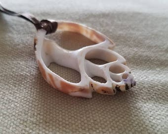 Sliced Seashell