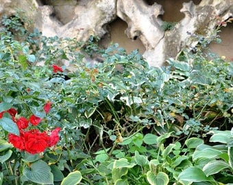 Venetian ... (Gothic Wall and Flowers)