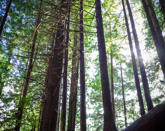 Redwood National Forest Photography Prints