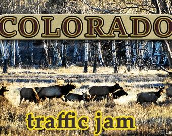 Colorado Elk Traffic Jam