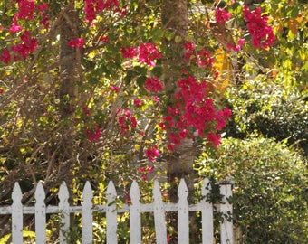 flower , picket fence , picture