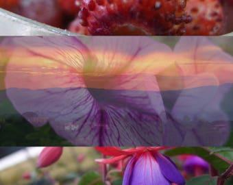 Photo print of strawberries, sunset, flower, microshot