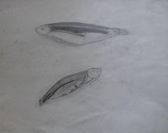 Two fish Artwork, vintage hand drawn