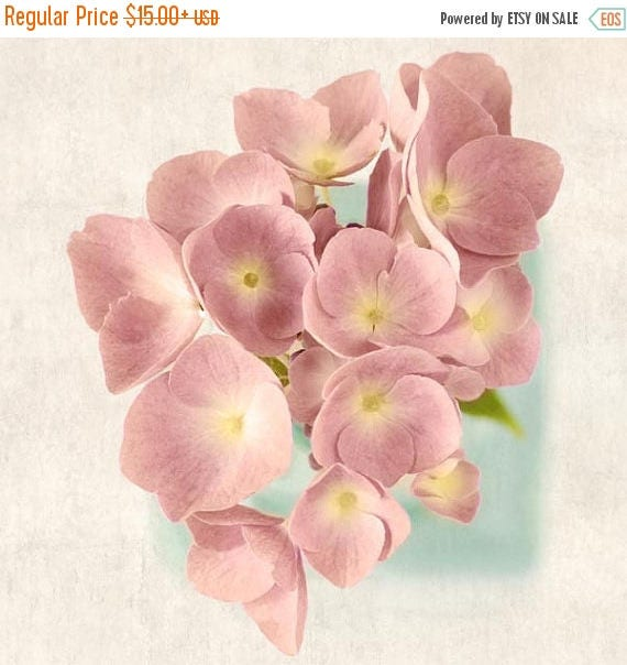 Hydrangea Flower Photography Print, Flower Art Print, Floral Wall Art, Cottage Chic, Pastel Pink, Aqua, Floral Photography