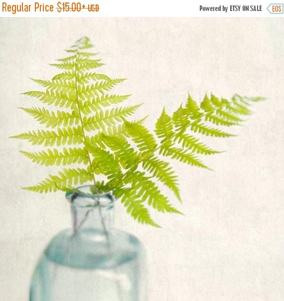 Fern Print, Fine Art Photography Print, Nature Art Print, Fern Art, Woodland Decor, Fern Home Decor, Wall Art