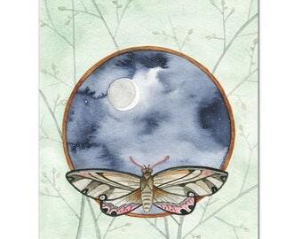 Night Moth // archival print