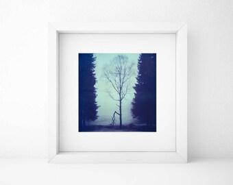 Norway, Old Polaroids, Mamiya, Polaroid Photography, Winter, Eerie, Misty, Woods, RB67, type 670, Landscape Photography, Tree, Norwegian