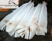 """Large Long Real Bourbon Red Turkey Tail Feathers Natural Cruelty Free Feathers Loose Eco Real Bird Feathers For Crafts 4 @ 14 - 14.5"""" / BRT"""