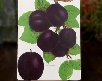 Antique Print of Plums on Panel - Rare 1890 Chromolithograph - Ready to Display