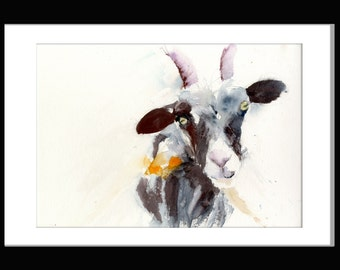 LIMITED edition print of  watercolour  Billy GOAT  ref 2552 farmyard animal art illustration of watercolour  hand signed