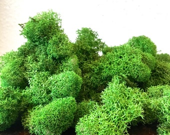 Reindeer Moss .5 oz - Green